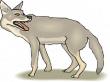 Tier, Schatten, Schwanz, Zunge, Kojote