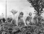 File:Bundesarchiv Bild 183-57429-0001, Nessa, Kartoffelkäferbekämpfung.jpg