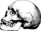 Knochen, Toten, Kopf, Skelett, Schädel