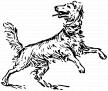Dog 2 by Firkin